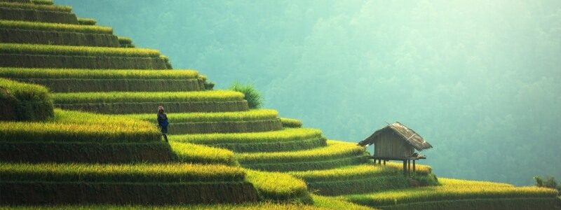 Ako varia ryžu čínania